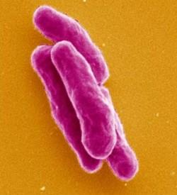 Инфекционные болезни в современном обществе