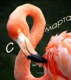 Празднование 8 Марта